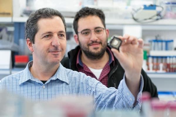 Фантастические перспективы для разработки лекарств без экспериментов на животных: бионические чипы от профессора Еврейского университета